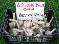 Aglione-2014-Copia