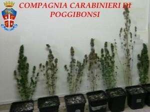 le piante cannabis rinvenute dai Carabinieri.