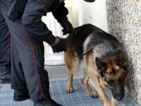 unità-cinofila-carabinieri