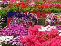 mostra fiori