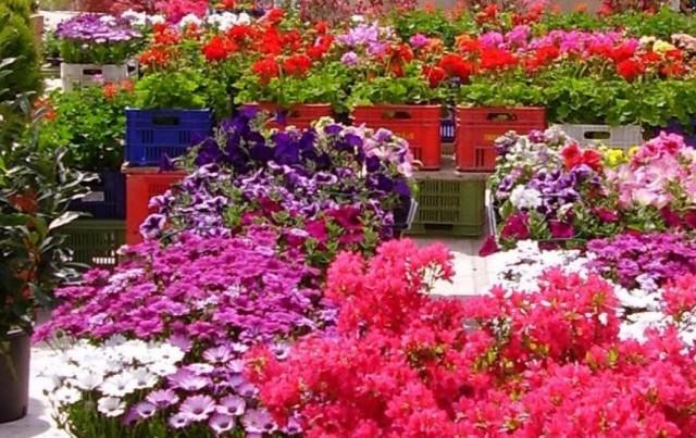 Torna la mostra mercato di piante e fiori antenna radio esse for Mostre mercato fiori 2017