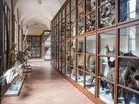 museo accademia fisiocritici 2