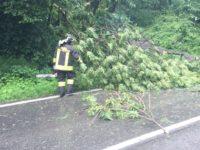 vigili-del-fuoco-caduta-alberi