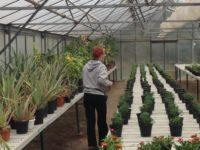 Scuola Istituto agrario Ricasoli serra