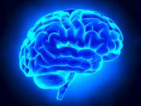 cervello-3
