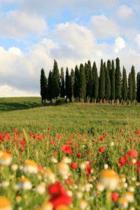 Valdorcia cipressi paesaggio 2