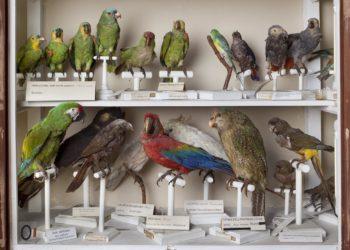 Fisiocritici Sez. Zoologica-Pappagalli-Foto B. Bruchi