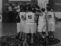 cus basket springtails