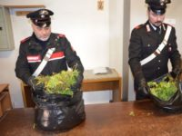 carabinieri marijuana sequestrata