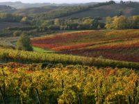 vigne Chianti autunno