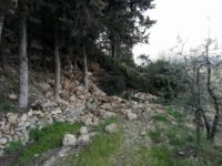 san gimignano crollo mura