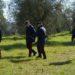 Incidente di caccia a Buonconvento, spara al fagiano ma colpisce l'amico