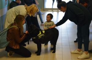 pet therapy3