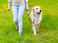 cane passeggio prato