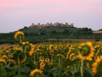 Monteriggioni-girasoli_640x427