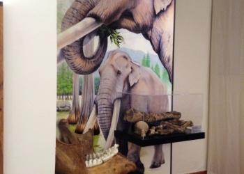 Museo Preistorico Monte Cetona (3)