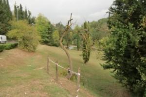 albero secco 2_800x531
