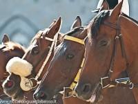 cavalli canape primo piano_800x532