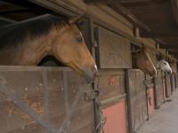 cavalli in scuderia generica