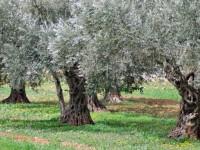 oliveta_800x509
