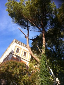 pini porta romana