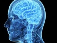 ricerca cervello_800x422