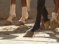 zoccoli cavalli tufo 2_800x532
